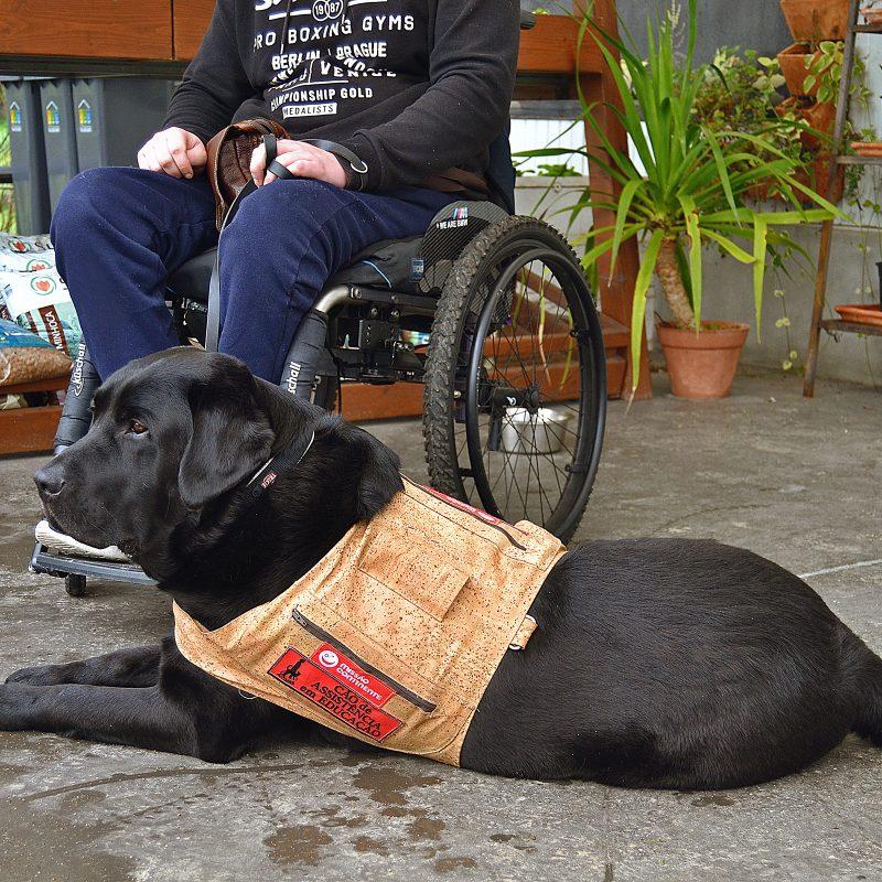 Cão de Assistência - Ânimas